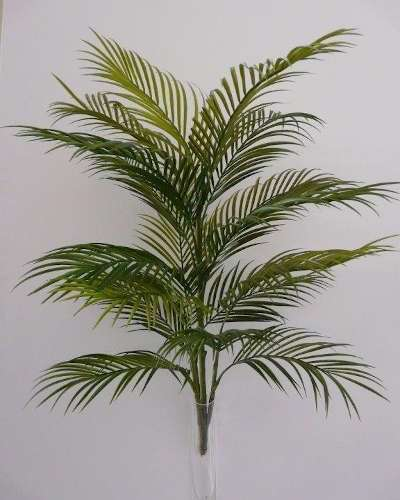 PALMA ARECA PLANT 90 CM